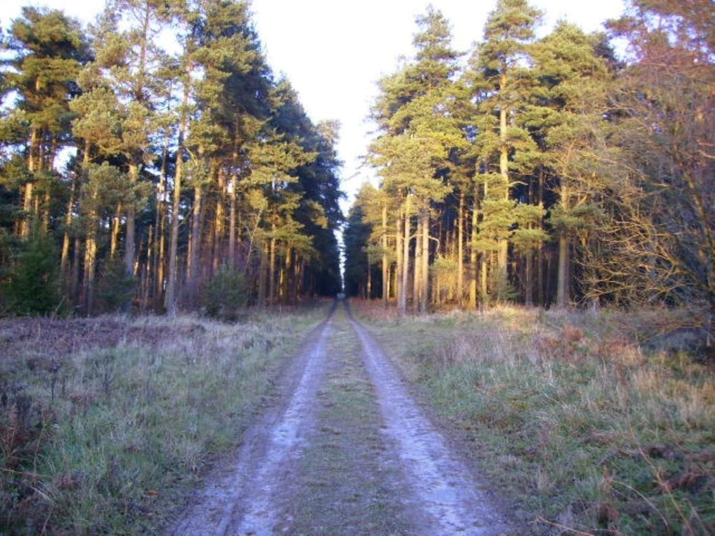 Dalby Forest, North York Moors, Phil Catterall