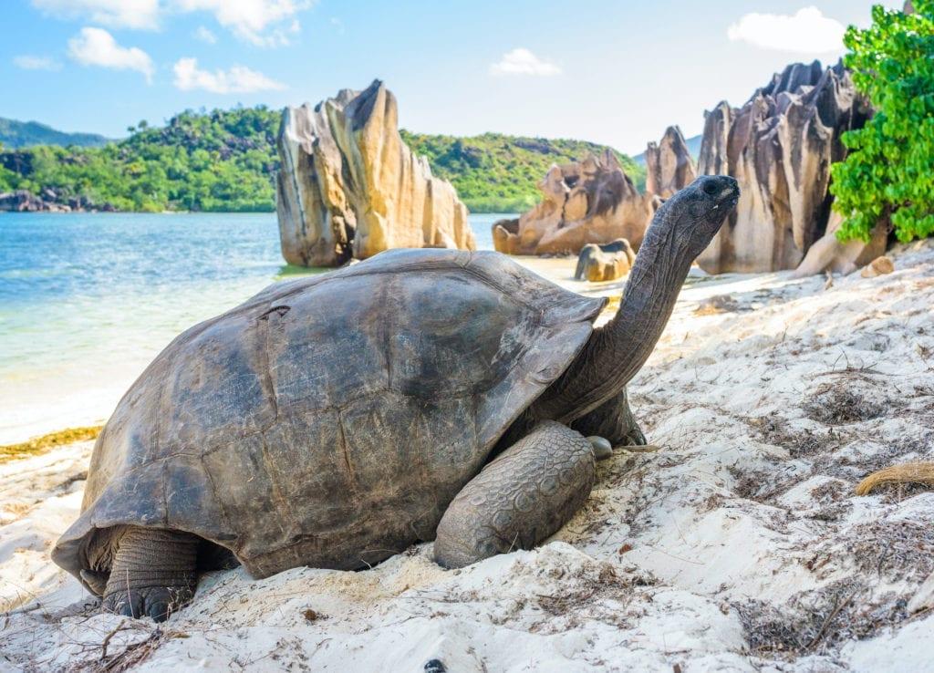 Giant tortoise Aldabra Seychelles by Jan Bures Shutterstock
