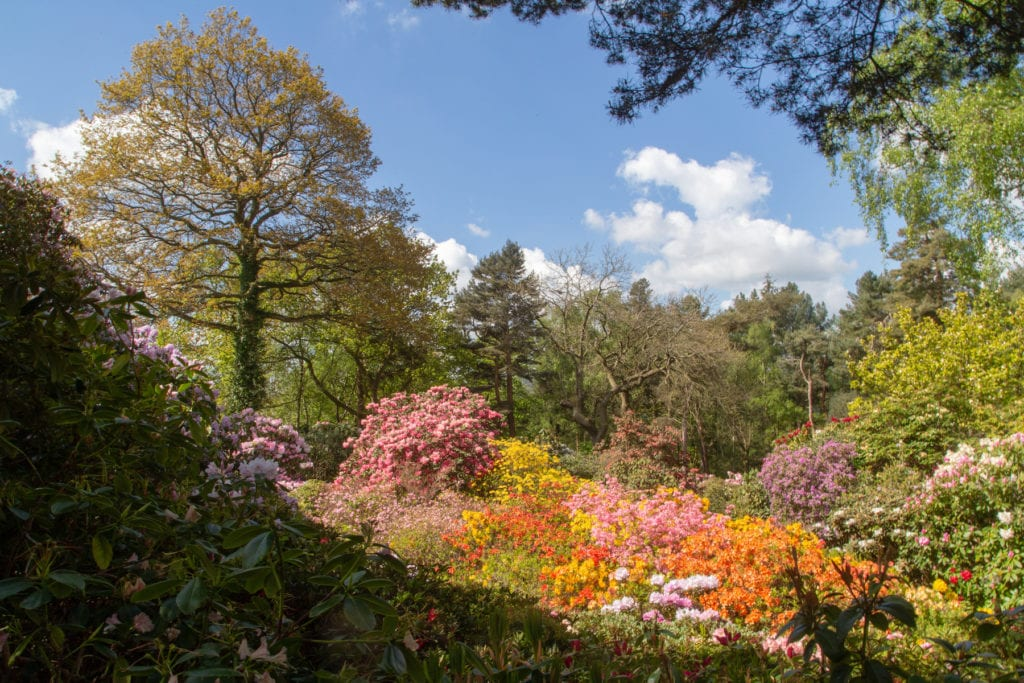 Lea Gardens Peak District best places to see spring flowers by Tom Parnell Flickr