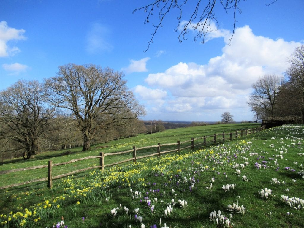 Nymans Best places to see spring flowers Sussex by Poliphilo Wikimedia Commons