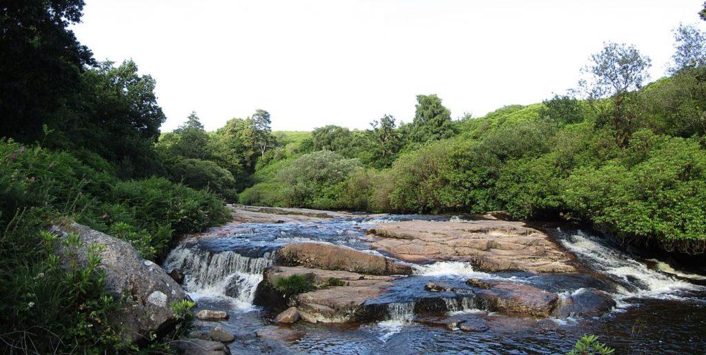 River Avon, South Devon, Partonez