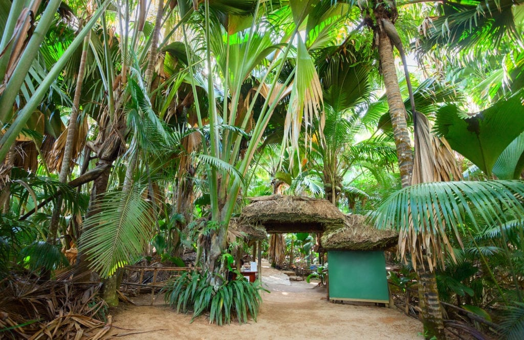 Giant tortoises, endemic palms and birds galore: the best of the Seychelles