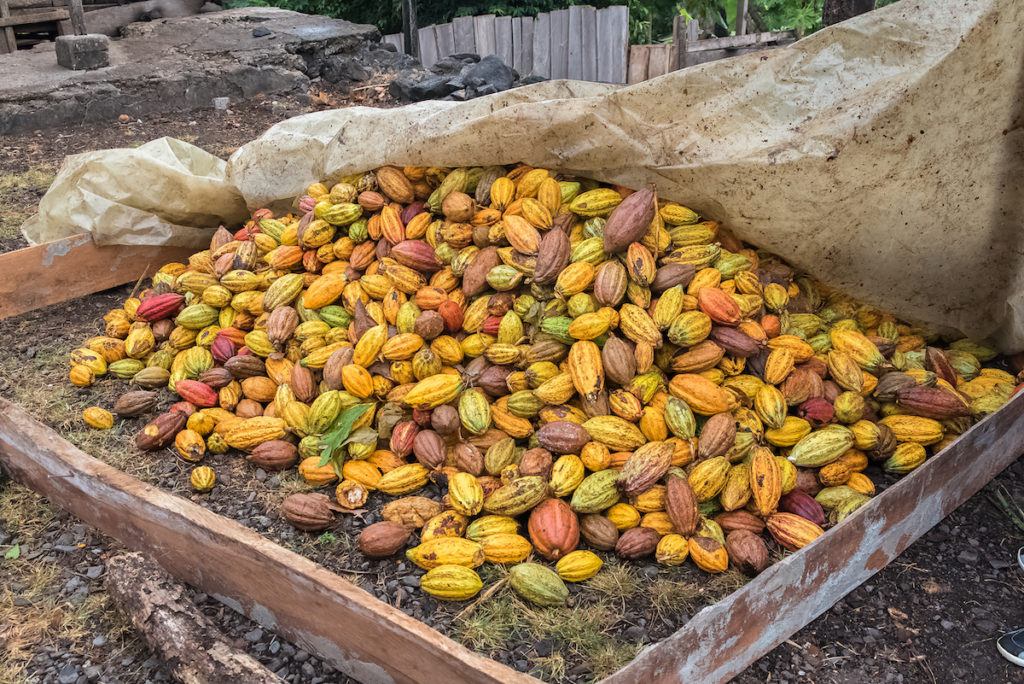 Cacao pods in Sao Tome and Principe by Pascale Gueret Shutterstock