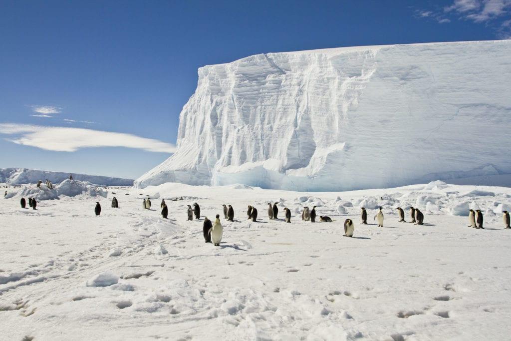 Emperor penguins Antarctica by Sergey 402 Shutterstock