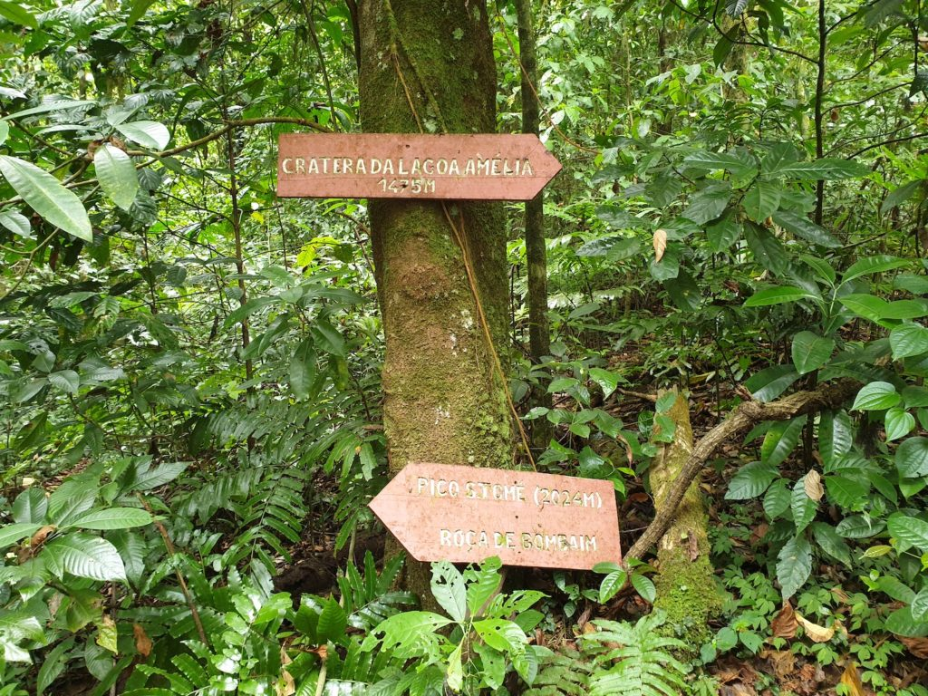 Jungle on the way to Lagoa Amalia Sao Tome Principe by Tilman Schimmel
