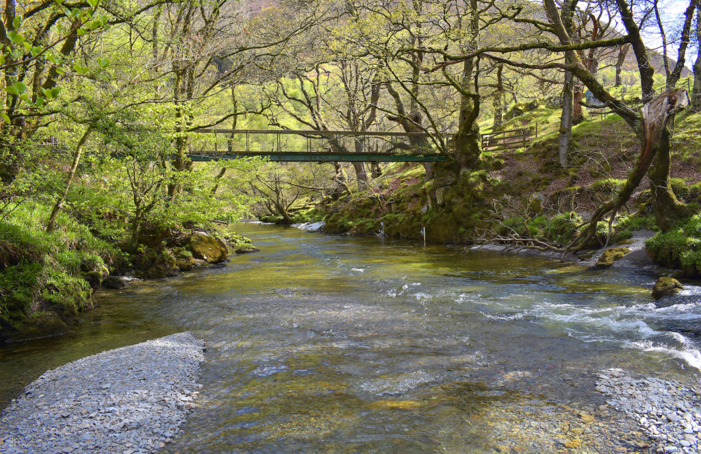 Gilfach Nature Reserve Wales by ieuan Shutterstock wildlife breaks Wales