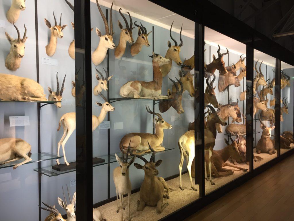 Natural_History_Museum_Tring_Chilterns_Matt_Brown_Flickr