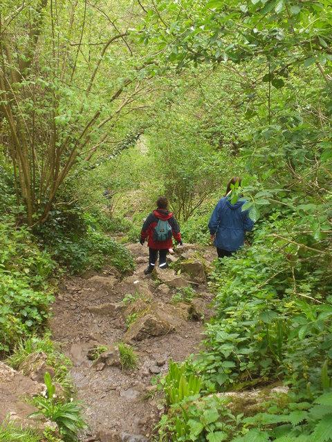 Ebbor Gorge, Somerset, Dave Beynon, Wikimedia Commons