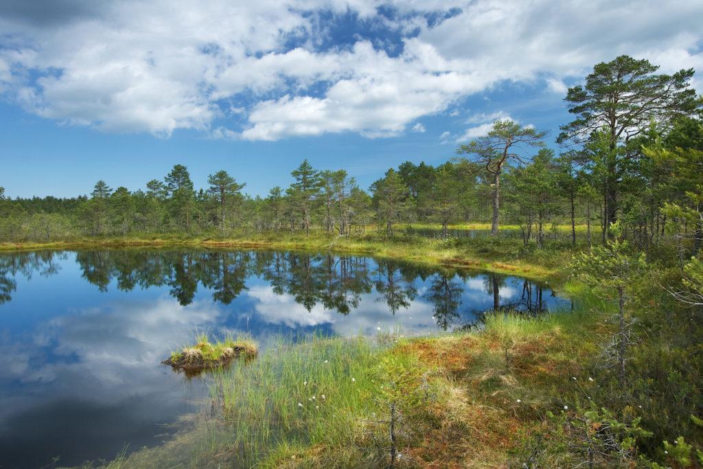 Lahemaa National Park Estonia by LeManna, Shutterstock