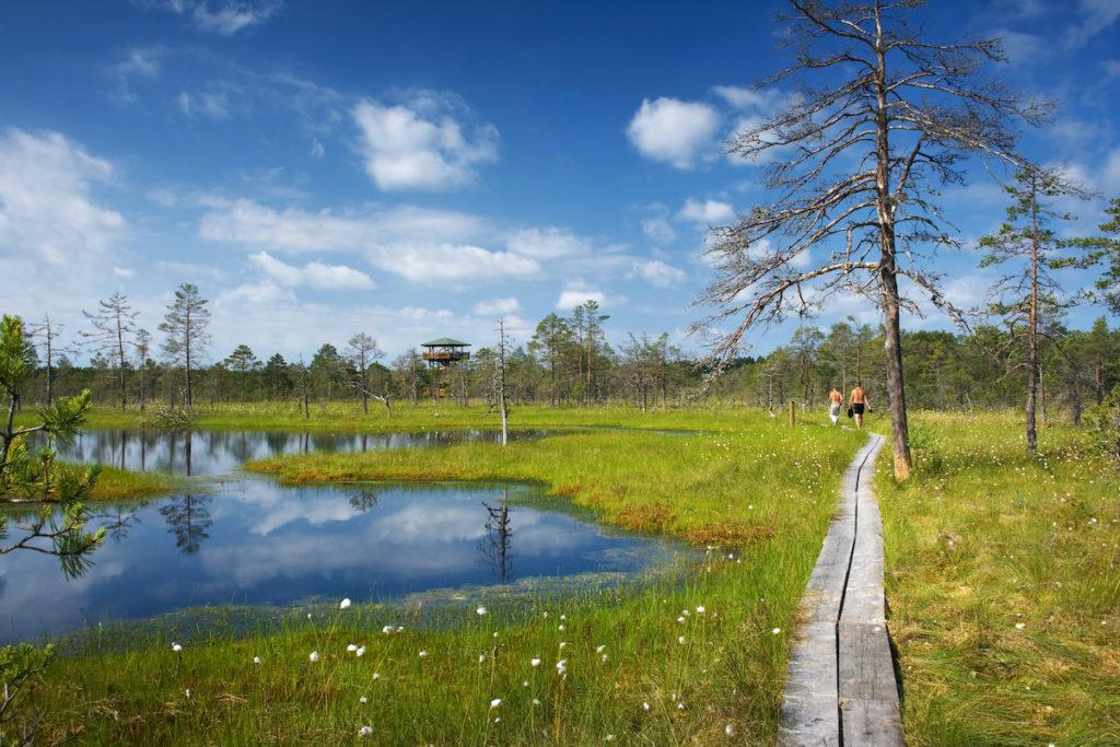 Lahemaa National Park Estonia by LeManna Shutterstock