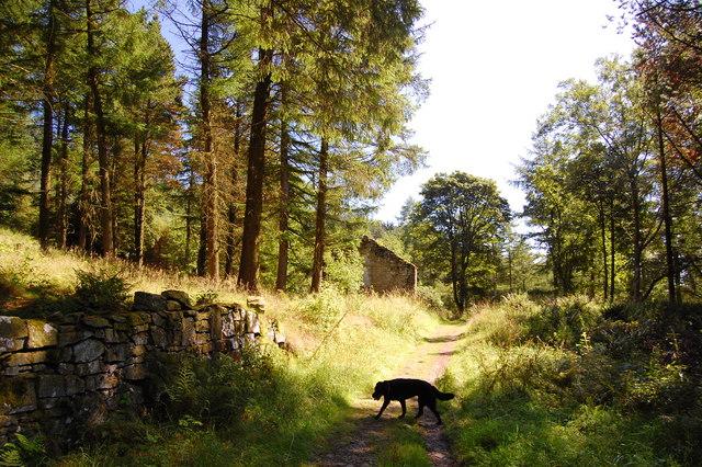 Macclesfield Forest, Cheshire, Trevor Harris, Wikimedia Commons