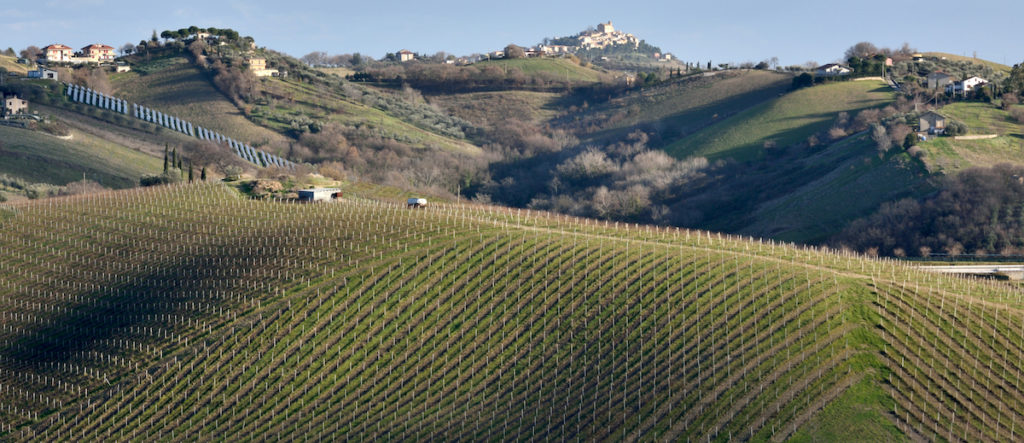 Umbria Wine by Mario Troiani Shutterstock food and drink Umbria and the Marche