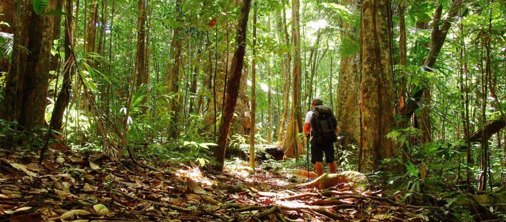 Wai'tukubuli National Trail, Dominica by Paul Crask