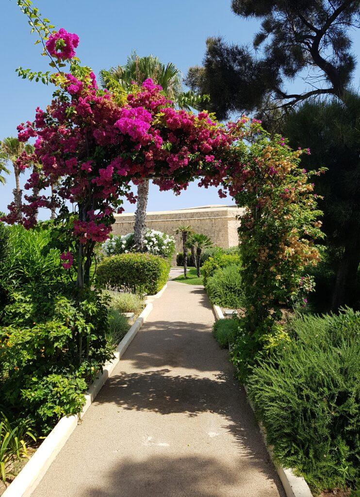 Phoenica, Malta, Juliet Rix
