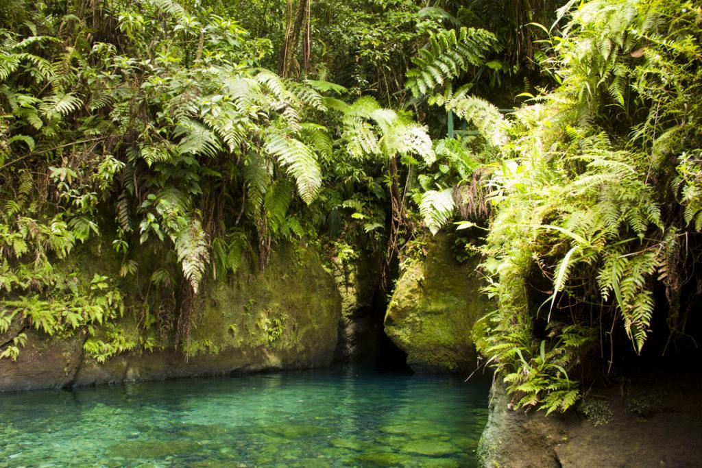 Ti Tou Gorge, Dominica by Emily Eriksson, Shutterstock