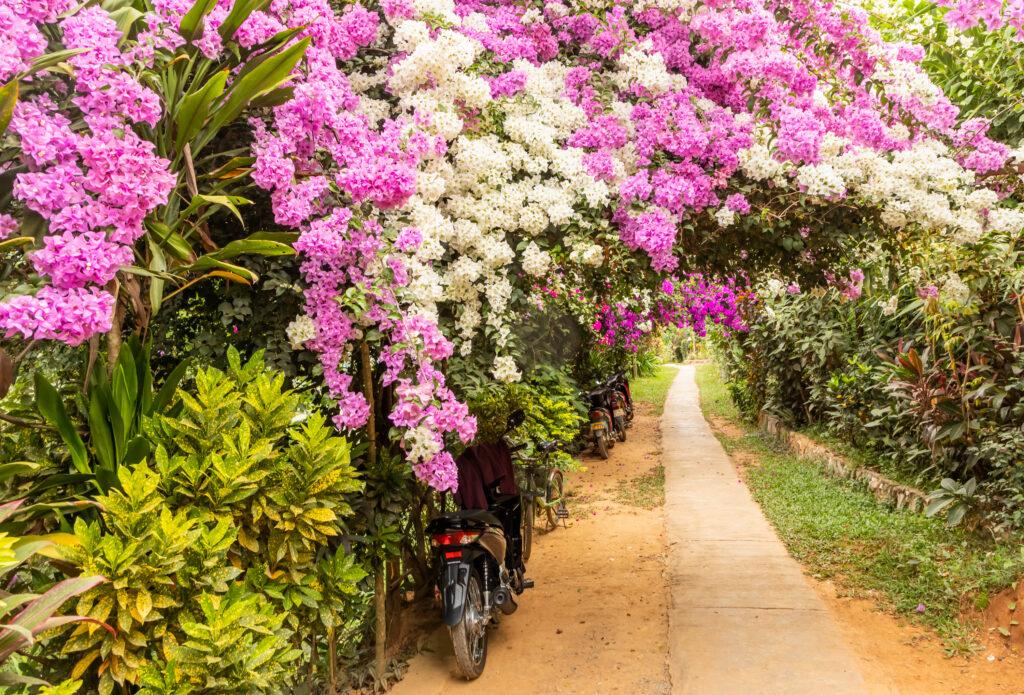 Flowers, Luang Prabang, Laos © Bharat Patel