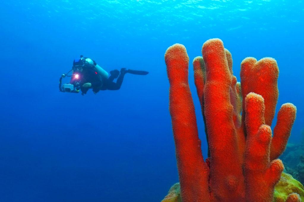 Scuba diving, Dominica by blue-sea.cz, Shutterstock
