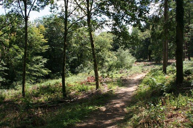 Idless Woods St Piran Trail cycling Cornwall