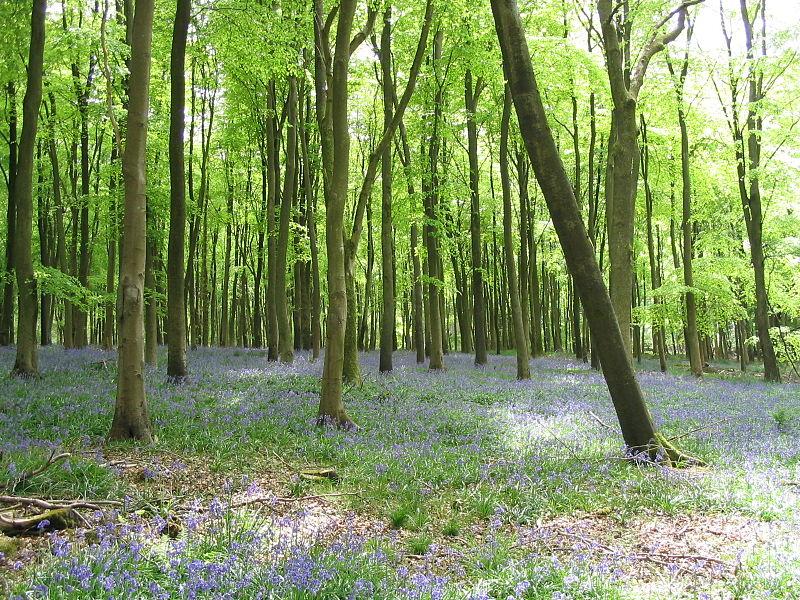 Savernake Forest spookiest woods Britain