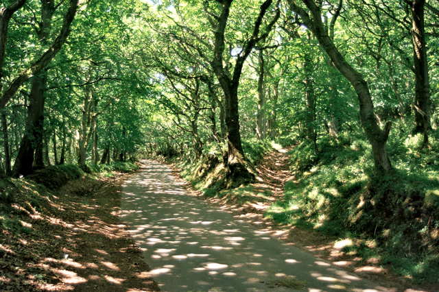 Shervage Forest spookiest woods Britain