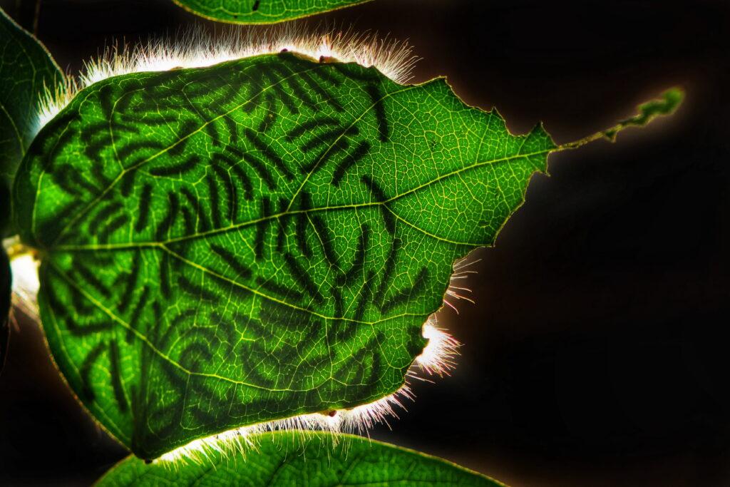Leaves Kolkata Dibakar Roy Focus for Survival