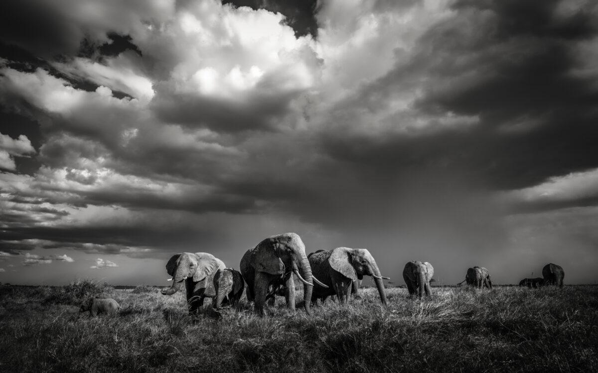 Serengeti Artur Stankiewicz Focus For Survival