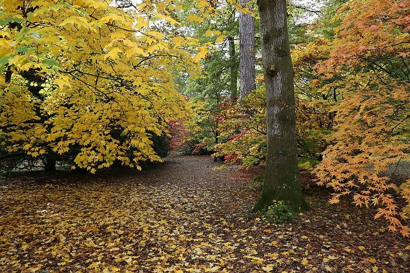 Westonbirt Arboretum autumn UK
