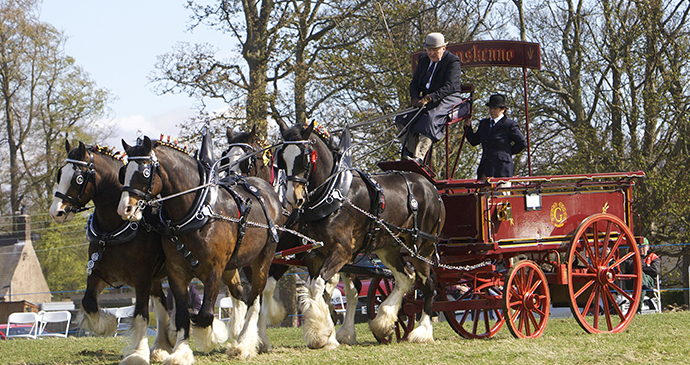 Festival of the Heavy Horse Northumberland by Hay Farm Heavy Horse Festival best family days out england