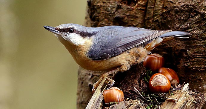 A nuthatch at Eskrigg Nature Reserve © Andrina Laidler