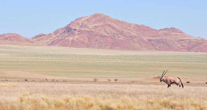 Oryx, Namib desert by Grobler Du Preez