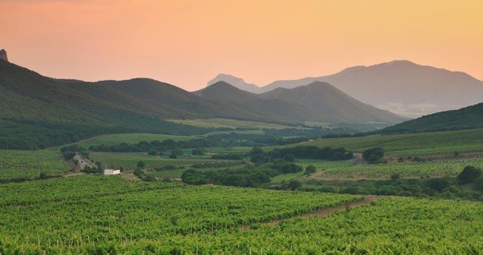 Vineyards in Lebanon © Anton Petrus, Shutterstock