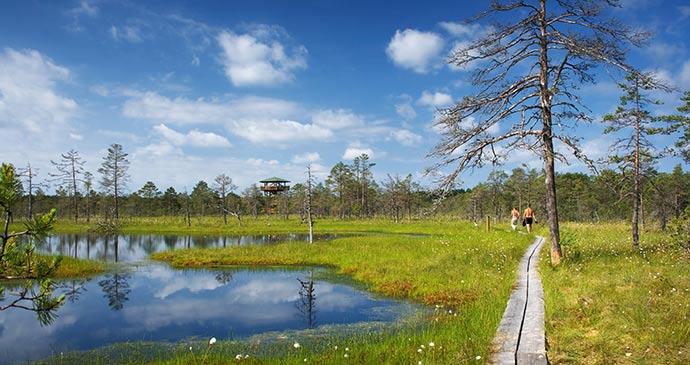 The bogs at the Lahemaa National Park, Estonia by Anna Grigorjeva, Shutterstock