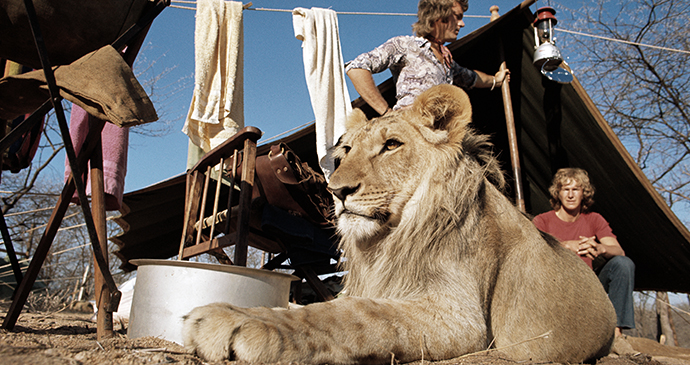 Christian the Lion by Derek Cattani