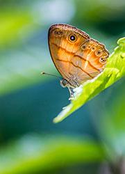 Butterfly, Brunei, Asia by Jan S., Shutterstock