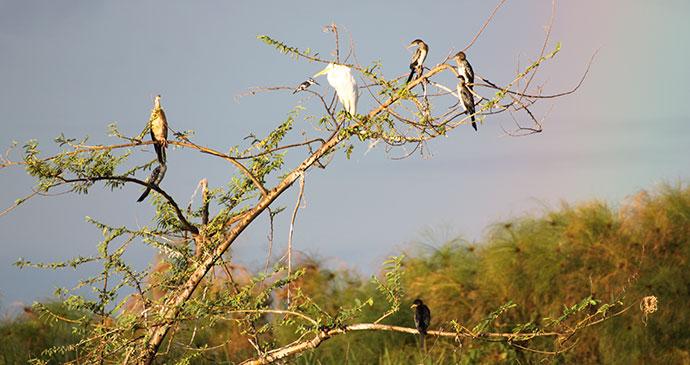 Birds, Lake Ihema, Rwanda by Anna Moores