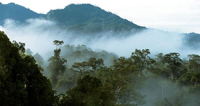 Ulu Temburong National Park, Brunei, Borneo, Asia by Sarawaktourism