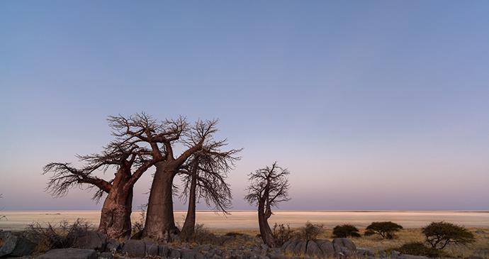 Baobabs, Makgadikagi Pans, Botswana by Hannes Thirion, Shutterstock