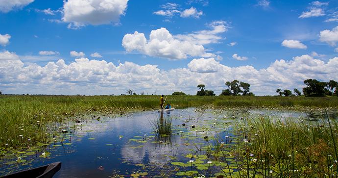 Mokoro trip, Okavango Delta, Hiromi Ito Ame, Shutterstock