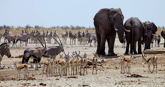 Chobe National Park Botswana by Peek Creative Collective, Shutterstock