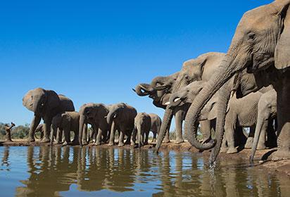 Elephants at a waterhole, Botswana by Villiers Steyn, Shutterstock