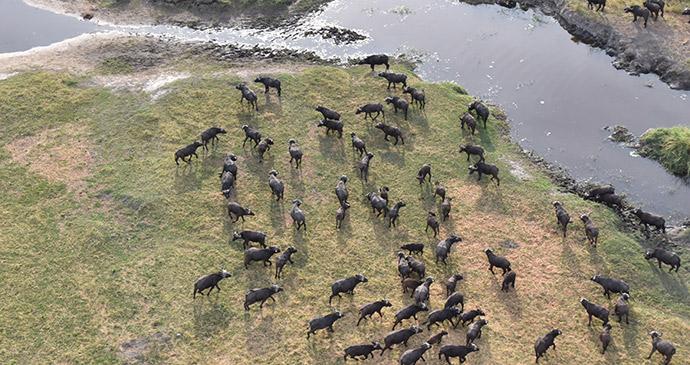 Scenic flight, Botswana by Tricia Hayne