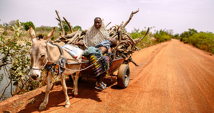 Donkey cart Burkina Faso Africa by Ollivier Girard CIFOR