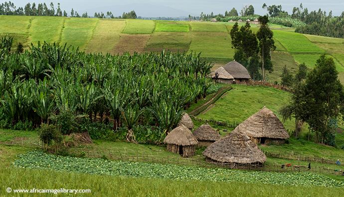 Dodola, Ethiopia by Ariadne Van Zandbergen