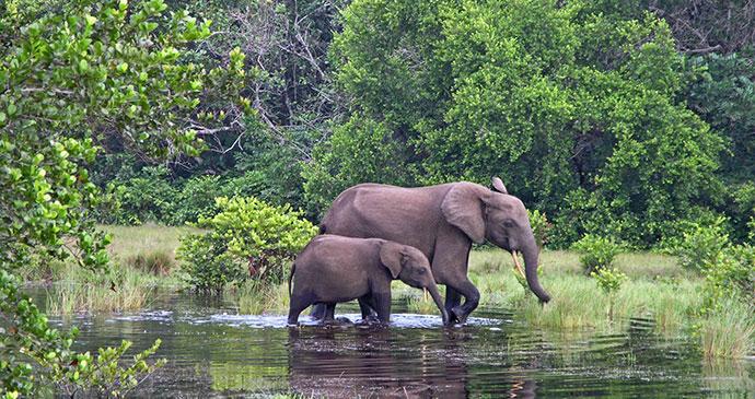 Loango National Park elephants by Beat Germann, Dreamstime