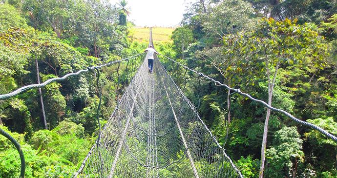 Franceville Lékédi Park Suspended Bridge Gabon by Kapuska Shutterstock