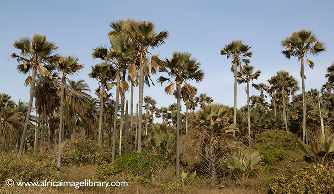 Bijilo Forest Park, The Gambia by Ariadne Van Zandbergen
