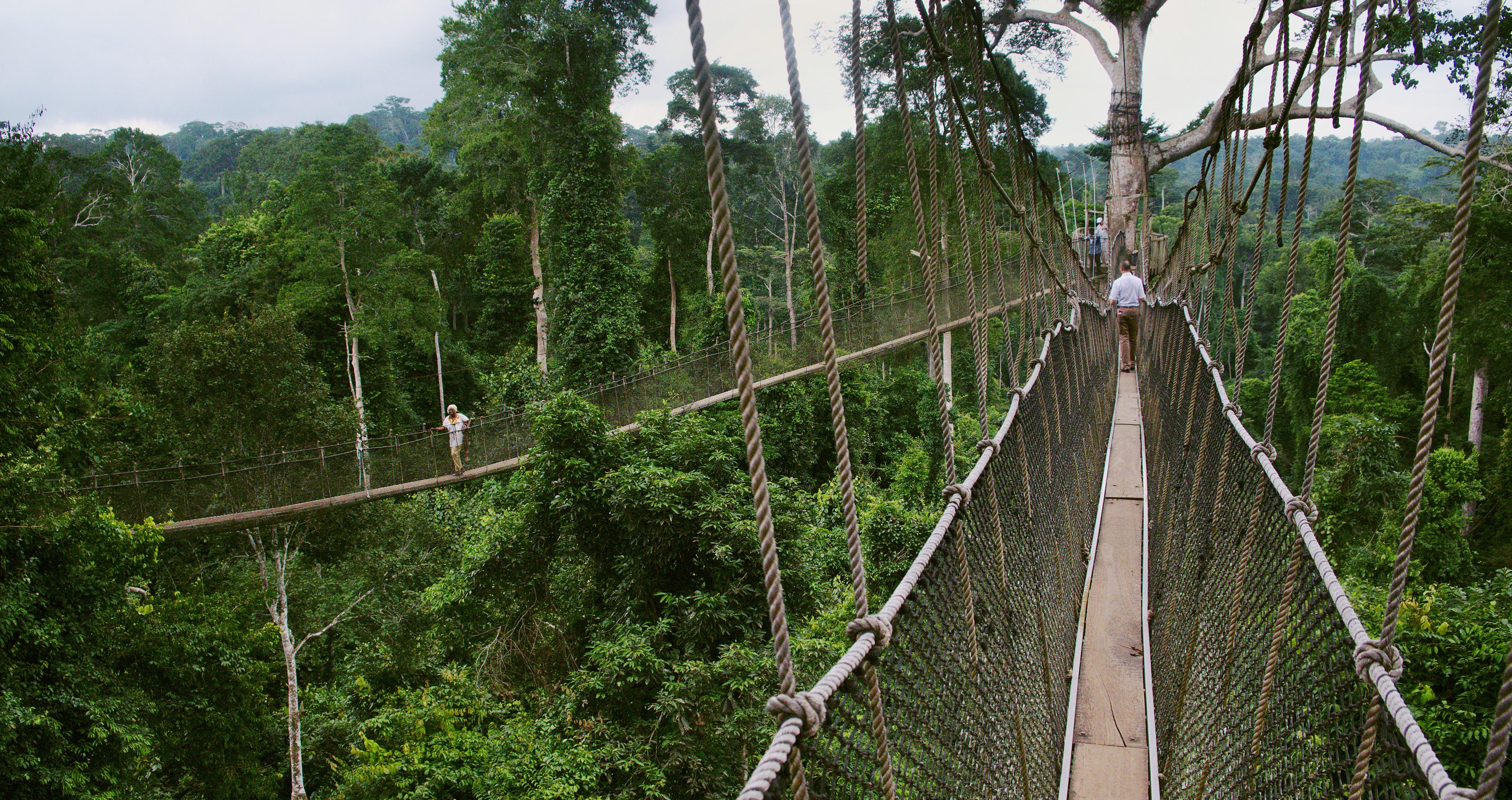 Kakum National Park's canopy walkway Ghana © Nancy Chuang, @nancyc_huang