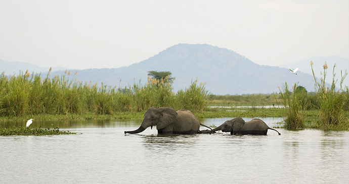 Elephants Liwonde National Park Dana Allen, Central African Wilderness Safaris