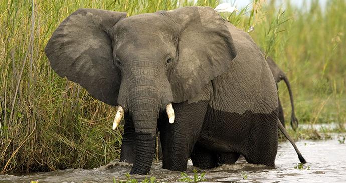 Elephants Liwonde National Park Dana Allen, Central African Wilderness Safaris