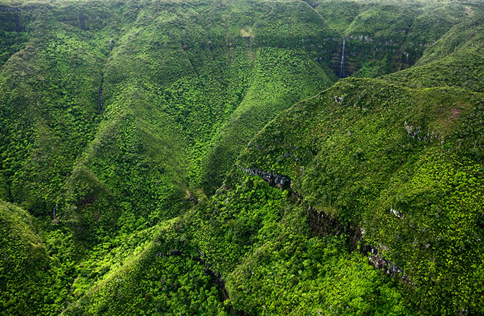 Wild rainforest in Mauritius © Mauritius Tourism Promotion Authority
